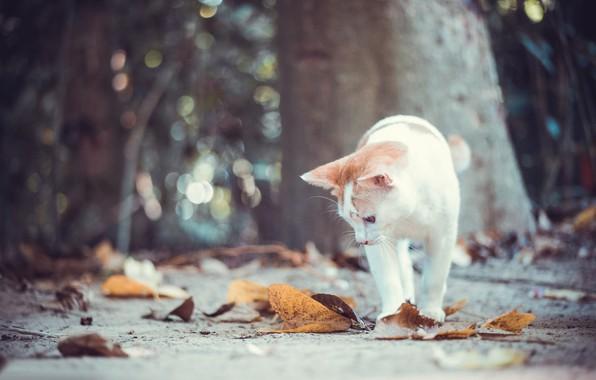 Картинка осень, кошка, кот, листья, котёнок, боке
