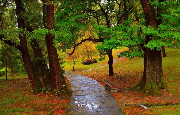 Картинка Осень, Дождь, Лужа, Парк, Fall, Дорожка, Park, Autumn, Rain, Path