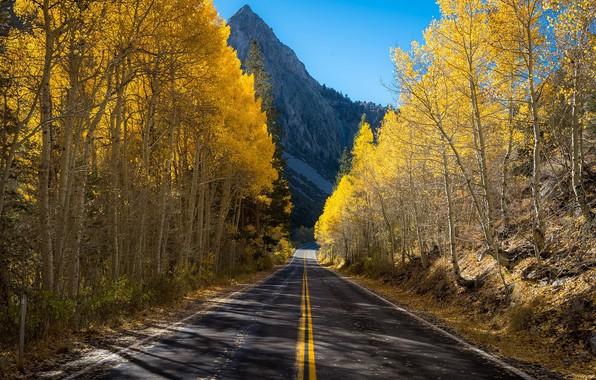 Картинка дорога, осень, гора, берёзы