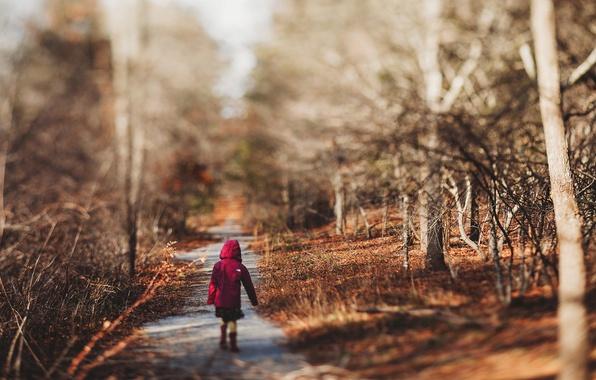 Картинка осень, лес, девочка