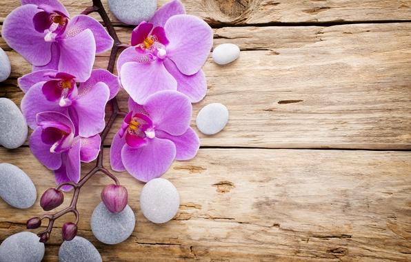 lavender rose iphone wallpaper