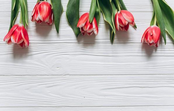 Картинка цветы, тюльпаны, красные, red, fresh, wood, flowers, beautiful, tulips, spring, tender