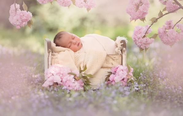 Картинка цветы, ветки, сон, сакура, малыш, цветение, младенец, кроватка, спящий