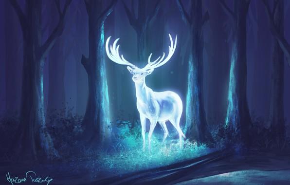 Картинка лес, ночь, олень, фэнтези, арт, рога