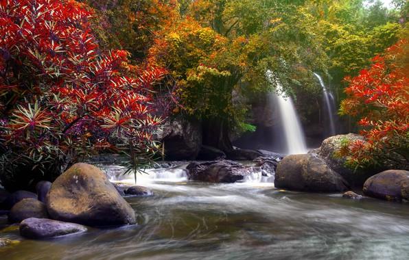 Картинка осень, лес, вода, деревья, природа, река, водопад, forest, каскад, river, nature, beautiful, autumn, waterfall