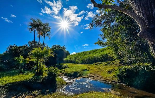 Картинка зелень, лето, трава, солнце, облака, деревья, ручей, пальмы, Франция, лучи солнца, кусты, синее небо, Reunion, …