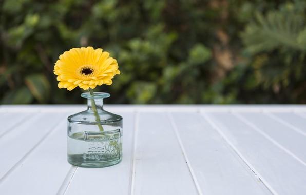 Картинка цветок, желтый, ваза, yellow, гербера
