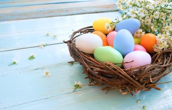 Картинка ромашки, яйца, пасха, гнездо, Праздник