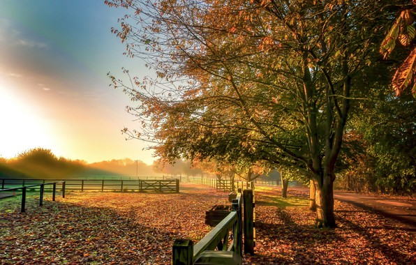 Картинка осень, небо, деревья