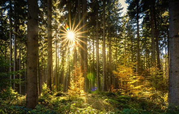 Картинка лес, солнце, лучи, деревья