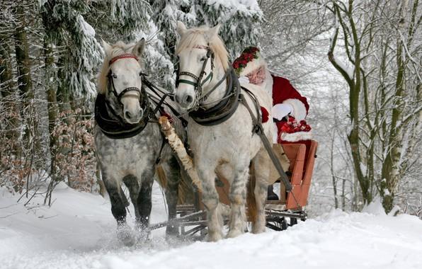 Картинка зима, лес, снег, кони, лошади, сани, Санта Клаус, Дед Мороз