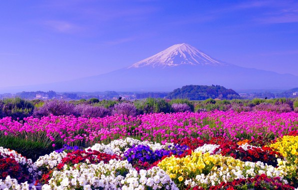 Фото обои Цветы, Япония, Обои, Пейзаж, Гора Фудзи
