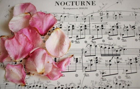 Картинка ноты, музыка, розы, лепестки