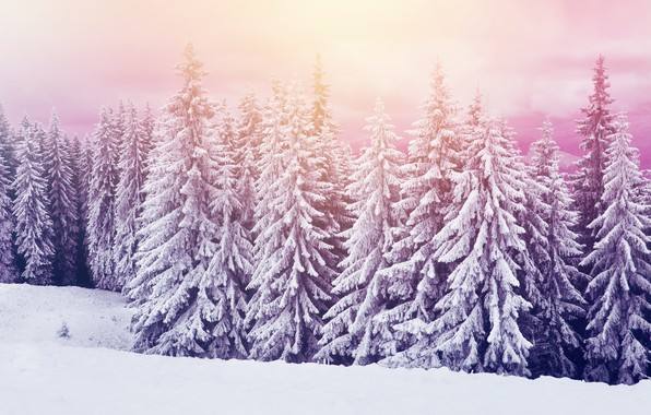 Фото обои холод, зима, снег, природа, елки, красота