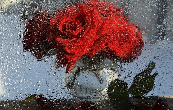 Картинка капли, макро, цветы, фантазия, дождь, розы, красота, букет, весна, натюрморт, россия, март, этюд, фотоимпрессионизм