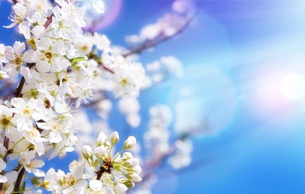 Картинка небо, солнце, цветы, ветки, весна, яблоня, цветение, sky, blossom, flowers, spring