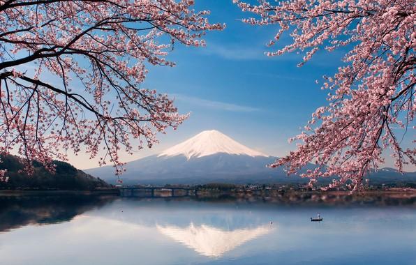 Картинка вода, цветы, озеро, лодка, весна, Япония, сакура, гора Фуджи, Фудзияма