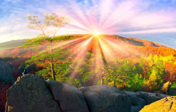 Картинка осень, лес, небо, солнце, лучи, деревья, горы, камни, скалы, высота, красота, Украина, Закарпатье