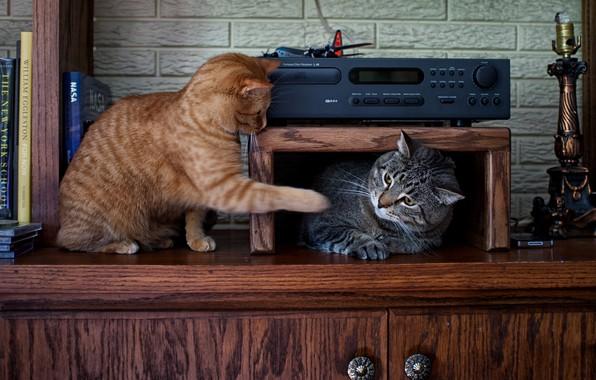 Картинка кот, кошки, серый, коты, игра, мебель, книги, рыжий, полка, шкаф, парочка, друзья, полосатый, два, подсвечник, …