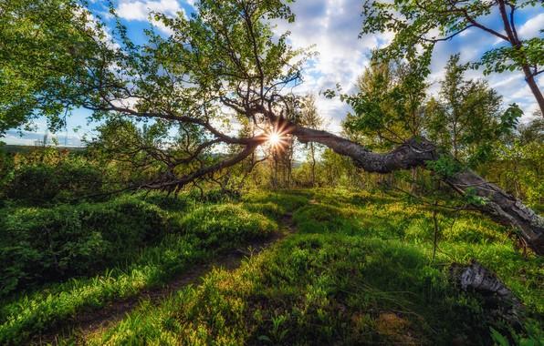 Картинка лес, Норвегия, солнечный свет