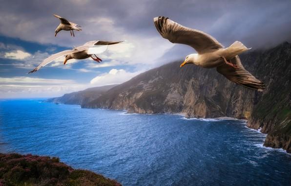 Картинка море, небо, облака, полет, пейзаж, птицы, тучи, природа, скалы, чайки, крылья, чайка, трио, берега, летят, …
