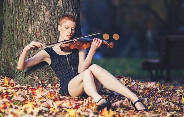 Картинка музыка, скрипка, Caitlyn, Sound of bokeh