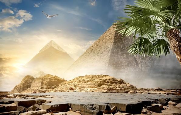 Картинка небо, солнце, облака, пальма, камни, птица, пустыня, фотошоп, Египет, пирамиды, верблюды, Cairo