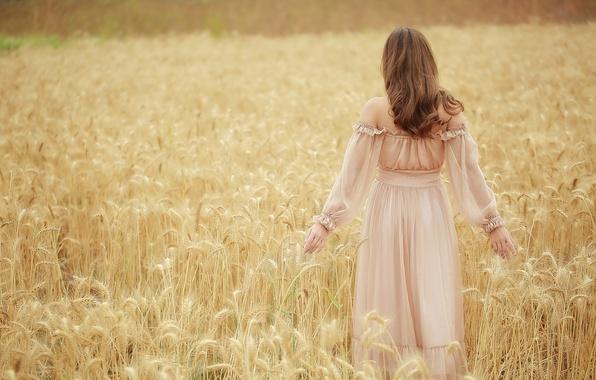Картинка поле, девушка, колосья, Brode十三
