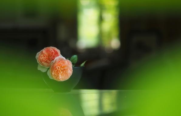 Картинка размытость, ваза, wallpaper, бутоны, чайная роза, боке