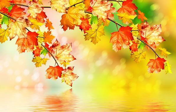 Картинка осень, листья, вода, клен