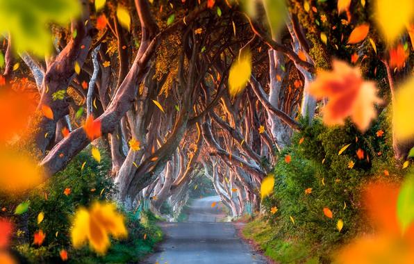 Картинка дорога, осень, лес, листья, деревья, аллея, кусты, боке