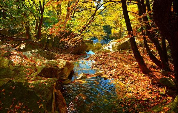 Картинка Поток, Осень, Лес, Ручей, Fall, Листва, Autumn, Colors, Forest, Leaves, Flow