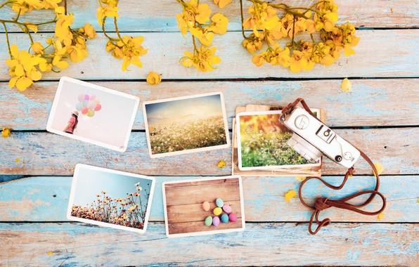 Картинка цветы, фото, яйца, весна, камера, colorful, Пасха, wood, flowers, camera, spring, Easter, eggs, decoration, tender