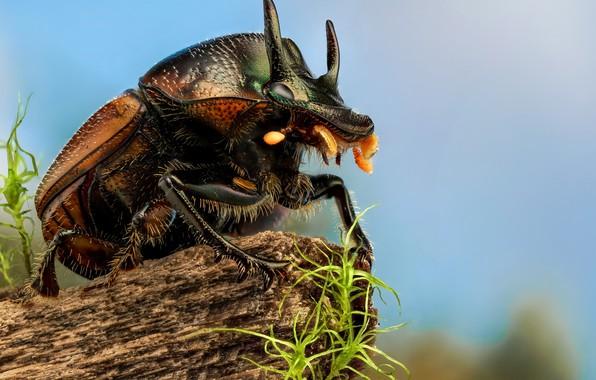 Картинка макро, жук, насекомое, Скарабей