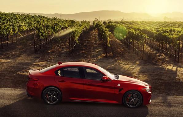 Картинка Alfa Romeo, Quadrifoglio, red car, Giulia, 2017
