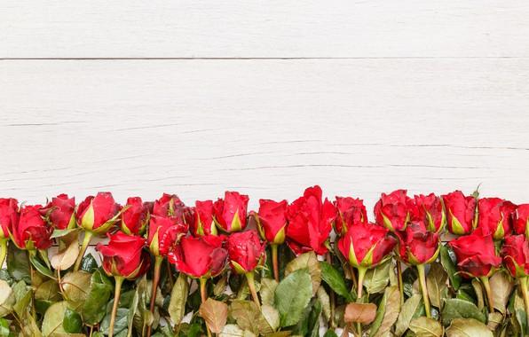 Картинка цветы, розы, букет, красные, red, бутоны, wood, flowers, romantic, roses, bud