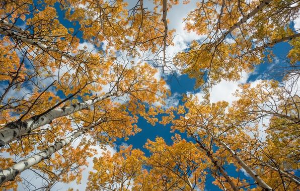 Картинка небо, деревья, берёзы