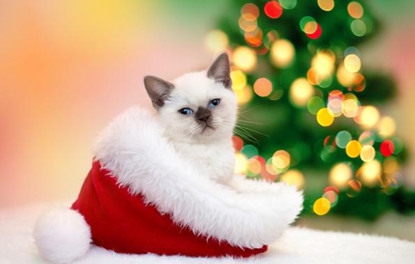 Картинка кошка, кот, шапка, Новый год, мех, котёнок, гирлянда, Christmas, колпак, боке, New Year, Cats