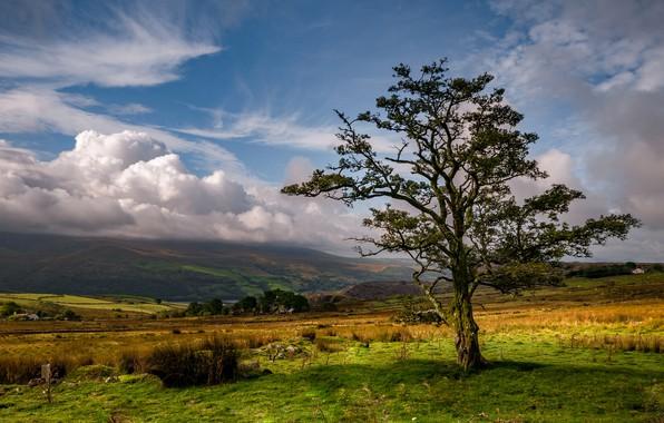 Картинка облака, дерево, долина, Уэльс, Нантл