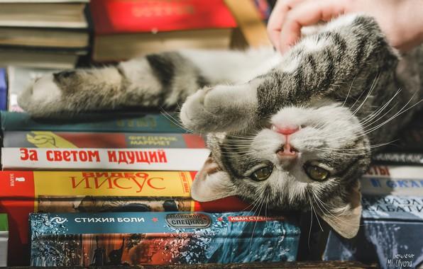 Картинка кошка, взгляд, книги, лапки, мордочка, котейка, Ульяна Мизинова