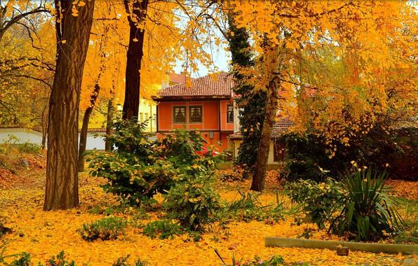 Картинка Осень, Деревья, Дом, House, Fall, Листва, Autumn, Trees, Листопад, Leaves