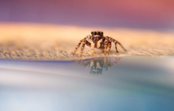 Картинка глазки, лапки, паук