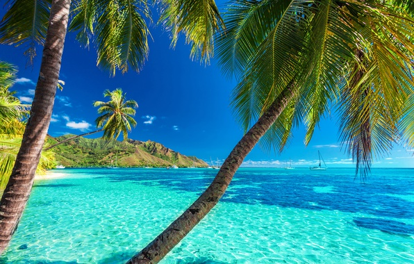 Картинка море, пляж, солнце, пальмы, берег, summer, beach, sea, island, paradise, palms, tropical