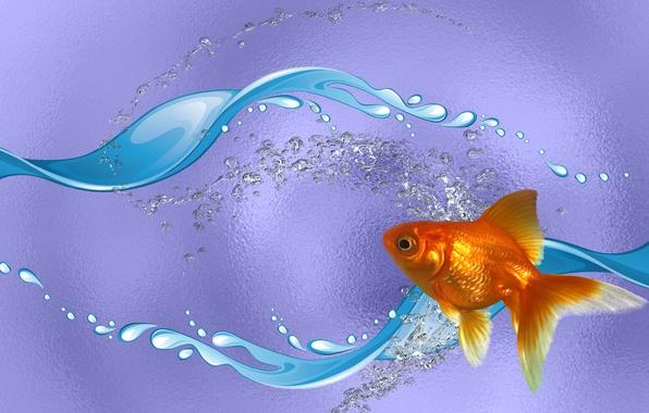 Обои золотая рыбка для рабочего стола