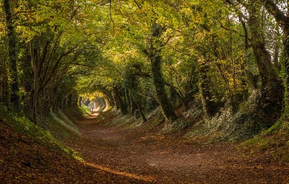 Картинка дорога, осень, деревья, Англия, туннель, тоннель, England, Западный Суссекс, West Sussex, Halnaker, Roman road, Халнакер, ...