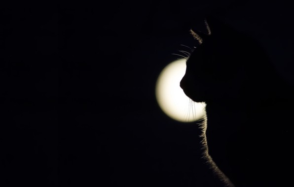 Картинка кошка, свет, тень