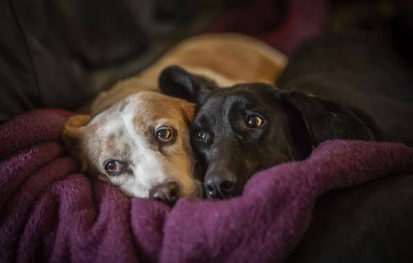 Картинка собаки, уют, дом, друзья
