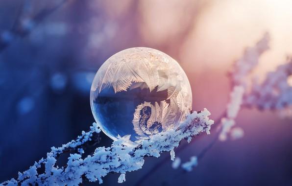Картинка иней, макро, ветки, узор, мороз, боке, мыльный пузырь