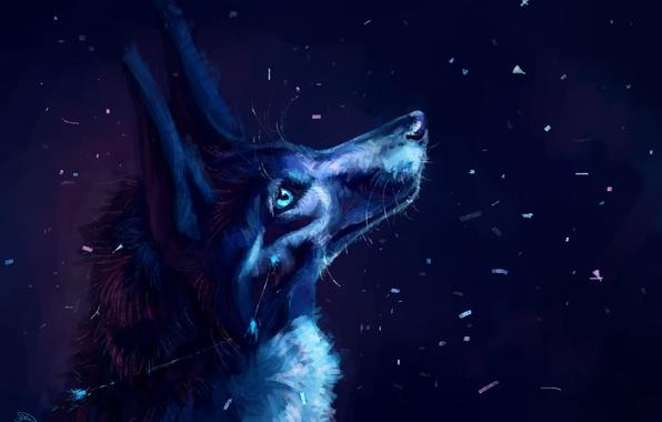 Картинка снег, ночь, волк, by AlaxendrA