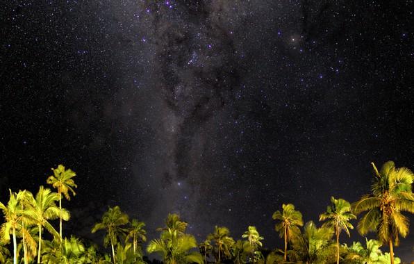 Картинка звезды, ночь, пальмы, млечный путь